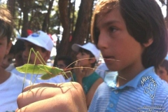 Grasshopper-Cekirge