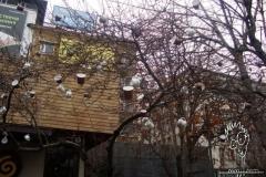fincan-agaci-cup-tree